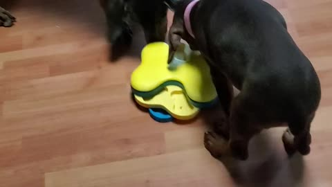 Playing hurricane toy with treats