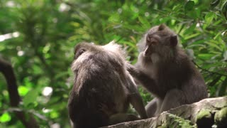 Beautiful monkeys taking care of each other