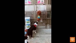 Smart dogs get inside the house