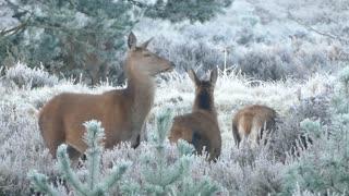 Deer Family Encounter!