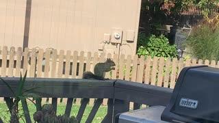 Squirrel w/ a Nut