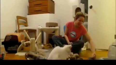 Funny cat scared of random things
