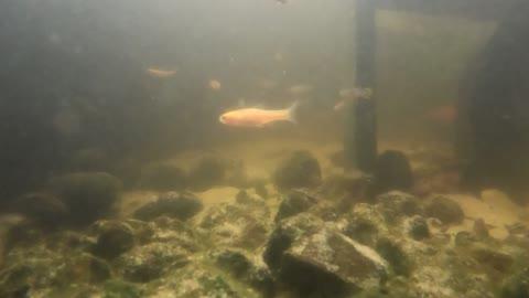 incredible underwater footage 4