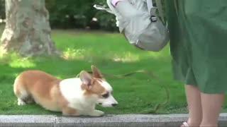 Dog Lover, pets water bottle