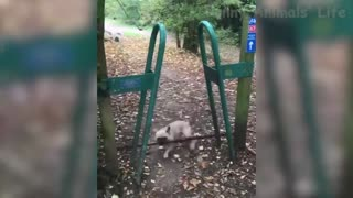 the craziest animal play between cats and dogs