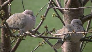 Birds nature pigeons wildlife feathers