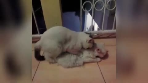 Animal mating Compliation