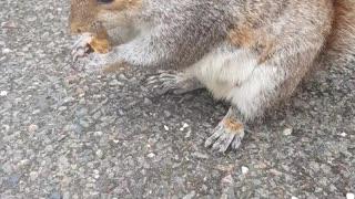 Feeding and Petting a Kind Wild Squirrel