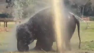 Elephant breaks sprinkler and makes their own fountain!gorgeous