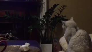 Funny, cat watching cartoon