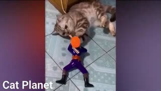 Cats can make you crazy
