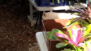 Advanced Bromeliads 6