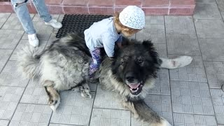 Little girl riding a dog