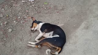 Three dog's sleeping in morning because after night security