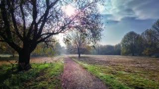 fantasy garden, beautiful nature
