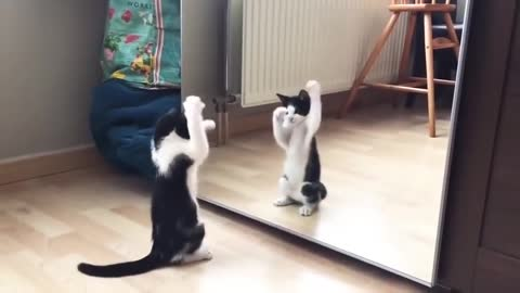 Funny Cat And mirror Video0