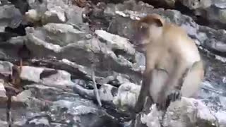 animals like naked women in public. watch the last 10 seconds