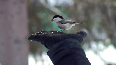 Hand feeding a tiny bird - With beautiful music