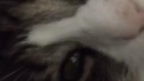 Cat Mornning Face So Funny