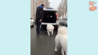 Smart Dogs!!!