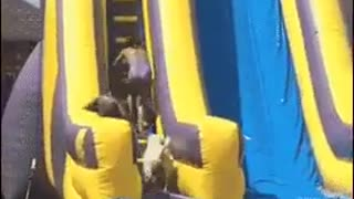 Dog and children Funny video