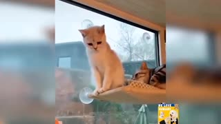 best cat acting funny like humans