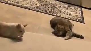 Cute cats 2021 2021