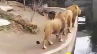 Best Animal Funny Video Must Watch