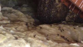 Ole neighbors Mobile home hive 4-16