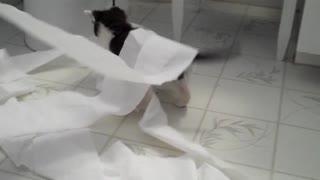 Kittens vs Toilet Paper