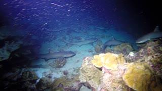 Worlds best night dive Part 1.