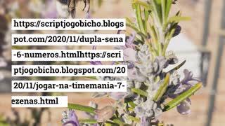 os palpites_jogo_do_bicho
