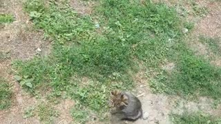Funny video with cat and dog🐱🐶