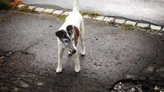 Dog Living in a Amazing Neighbourhood