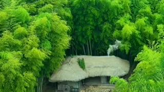 Meditation short video. Natural sounds.