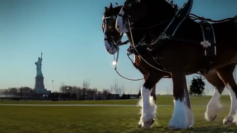 NEVER FORGET: Budweiser 9/11 Tribute Commercial