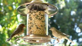 Relaxing footage of feeding birds