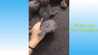 Watch pets being cute and funny