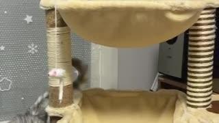 Cat detonating a tissue bomb