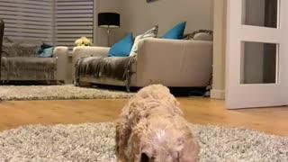 Dog Treat Temptation