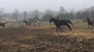 Horses running around in the pasture