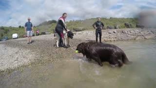 Newfoundland Dog Rescue
