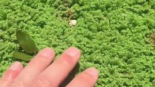 Satisfying Botanical Garden in Portugal