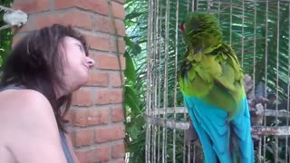 Funny, Angree Parrot Talking To Tourist