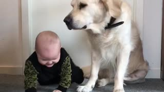 Baby and dog reacts on massage. 😝