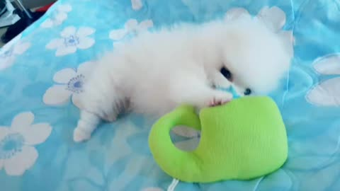 Puppy playing with a doll