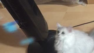 playing with a cats