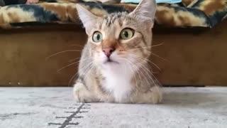 Cat Watching Horror 😱 Movie 😂