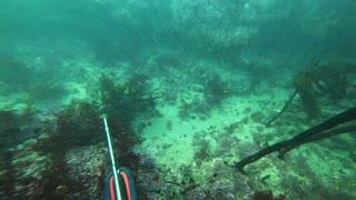 Spearfishing - Carmel Stillwater Cove