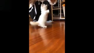 Cute cat - playing with their owners